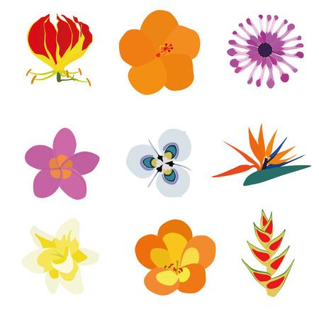 strelitzia: Set of nine exotic flowers containing: Flame Lily, Orange Hibiscus, African Daisy, Plumeria, Moraea villosa, Bird of Paradise, Vanilla, Tropical Rhododendron, Heliconia Wagneriana.
