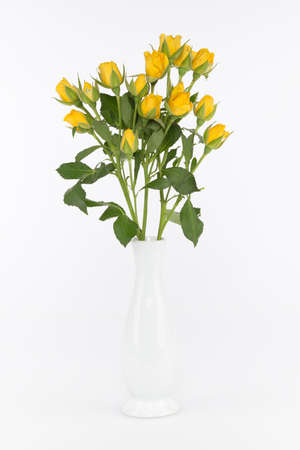 bouquet of bright yellow roses in a vase on a white background photo