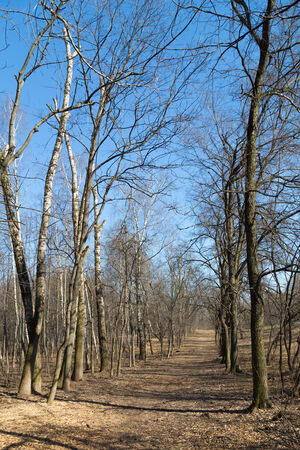 landscape in early spring and went off the path between the bare trees  photo