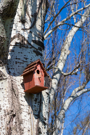 bird       s house: red birdhouse in a tree against a blue sky