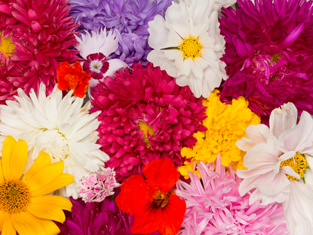 many beautiful different colored flowers asters, kosmeya, nasturtium, carnation, marigold  photo