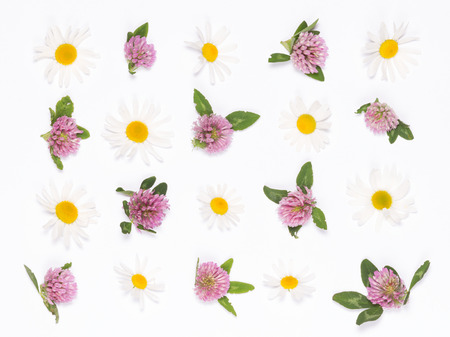 pink clover and white daisies with yellow center lined in rows on a white background photo