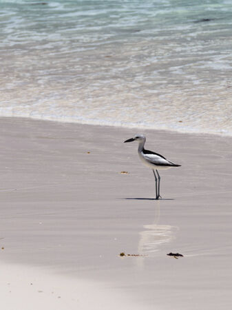 interspersed: Bird reflected in a white wet sand interspersed with pink granite in Seychelles Stock Photo