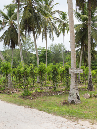 plantation of vanilla and a pointer towards the beach on the island of La Digue Seychelles