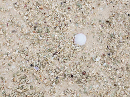 interspersed: sand interspersed with fragments of shells and from the fine fraction of pink granite