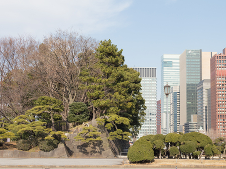 beautiful park in Tokyo is among the skyscrapers, Japan Stock Photo