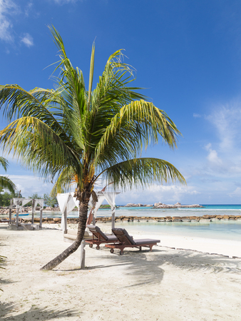 loungers: loungers on the beach under a palm tree, vertical