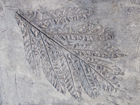 convex shape: big gray print beautiful plant leaf with veins in solid rock