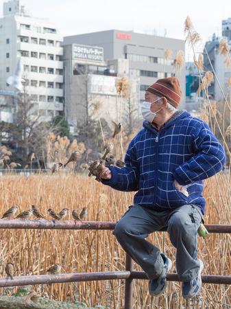 medical mask: Tokio - 4 de febrero de 2015: Una gran cantidad de gorriones vuelan alrededor y tratar de sentarse a una comida en la mano de un hombre en una chaqueta azul y una m�scara m�dica, sentado en la barandilla del 4 de febrero de 2015, Tokio, Jap�n