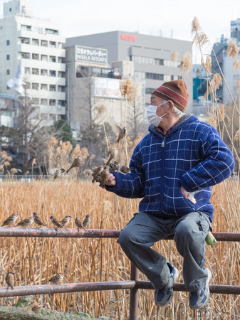 medical mask: Tokyo - February 4, 2015: A lot of sparrows flying around and try to sit down for a meal at the hand of an old man in a blue jacket and a medical mask, sitting on the banisters of February 4, 2015, Tokyo, Japan