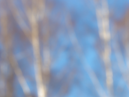 lyrical: blurred sky blue abstraction from the trunks bare white birches in early spring, creating a lyrical image Stock Photo