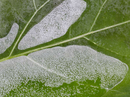 thin ice: abstraction thin ice with bubbles on green leaves streaked horizontally Stock Photo