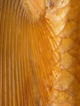 arcs: Organic bright abstraction of bright golden yellow beautiful fins and scales of fish with spots of arcs and rays