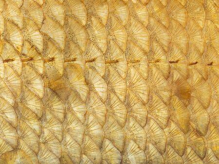 escamas de peces: abstracci�n org�nica de peces de oro hermoso con las escalas de puntos y rayas
