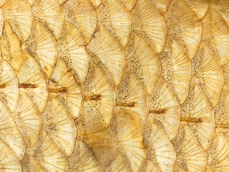 arcs: Organic bright abstraction of a beautiful bright golden fish scales with spots arcs and rays
