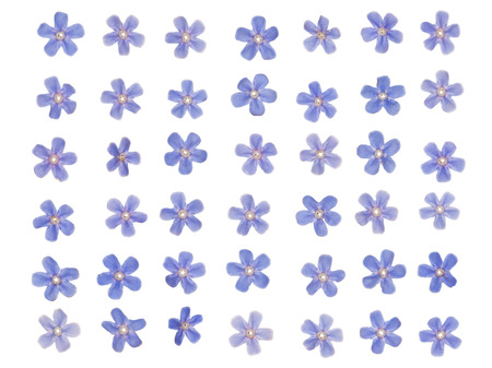 patern: patern of tiny blue forget-bright colors on a white background Stock Photo
