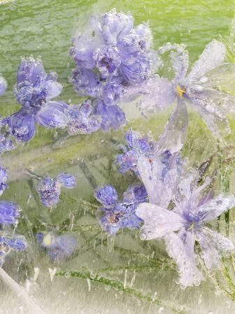 fleurs des champs: abstraction de petites belles lavande délicate délicates fleurs sauvages, figés dans la glace sur un fond vert organique et beaucoup de bulles d'air, vertical Banque d'images