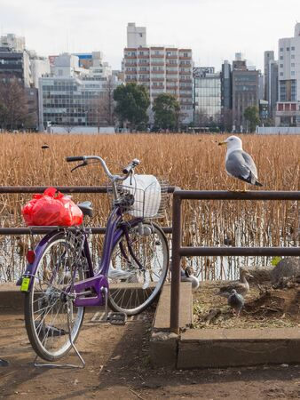 banisters: smart beautiful seagull sitting on iron banisters and looking at the purple bicycle parked