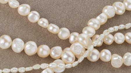 freshwater pearl: beautiful shiny white beads from large and small pearls on velvet gray and pink soft tissue