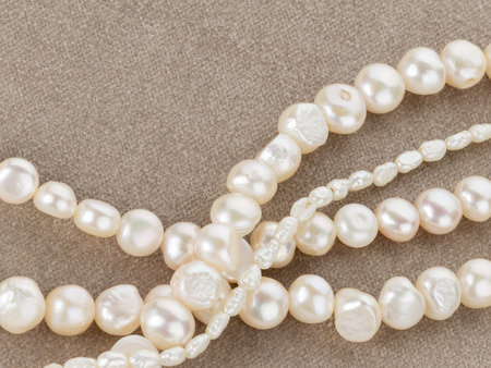 freshwater pearl: beautiful white beads from large and small natural pearls on a velvet gray and pink soft tissue