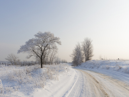 protectors: Beautiful winter landscape and dirt road with traces of protectors, covered with snow in the distance and goes a pure white fluffy snow on the tree and on the dry grass, cold evening, Moscow region