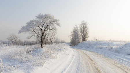 protectors: Beautiful winter landscape and dirt road with traces of protectors, covered with snow in the distance and goes a pure white fluffy snow on the tree and on the dry grass, evening, Moscow area