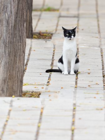 face in tree bark: smart beautiful young black and white cat sitting on the pavement of concrete tiles gray and green eyes looking at the camera