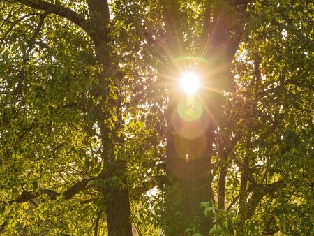 photons: Warm sunlight shining through the leaves and trunks of trees in a summer deciduous forest on a sunny day Stock Photo