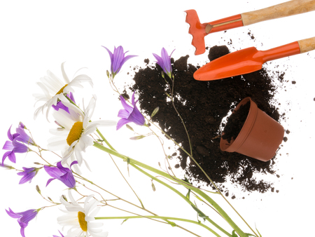 Garden still life with a shovel, a pitchfork, a plastic with brown goroshokom of scattered black fertile soil, and flowers field of daisies and purple bell and thin stems on a white background isolated