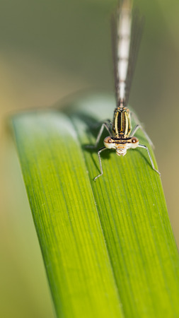 beautiful dragonfly with huge eyes is sitting on a green leaf on a sunny day in the garden Stock Photo