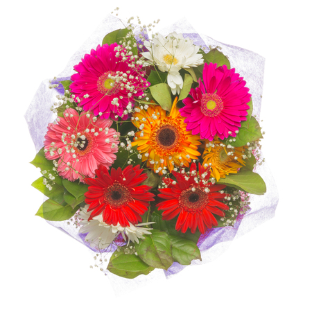 bright beautiful summer bouquet of flowers of pink, purple, red, orange gerbera, different colors and white babys breath on a white background isolated Stock Photo