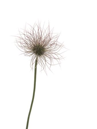 격리 된 흰색 배경에 부드러운 아름다운 꽃 장식 양파 다양성 스톡 콘텐츠