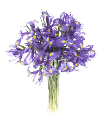 Beautiful bright bouquet of fresh delicate lilac flowers of irises with a yellow center on green stems on an isolated white background