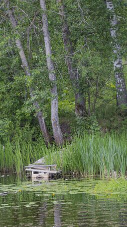 old wooden pier of planks on the river and water lilies and green grass in summer and reflections in calm water