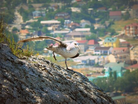 sudak: Crimea - the Black Sea city of Sudak