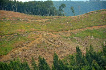 cutting down trees in the forests of the Carpathians in the mountains Фото со стока