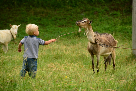 a boy and a goat on nature