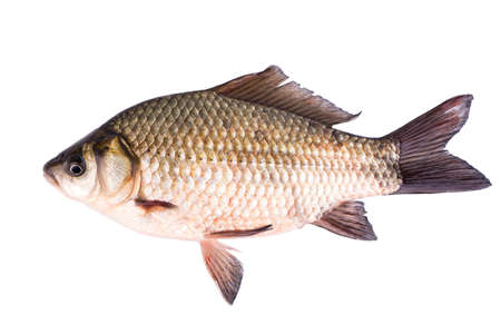Live fish crucian on a white background