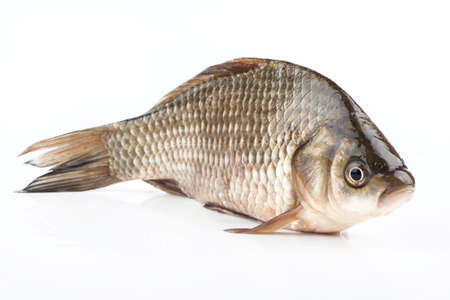 crucian carp: Fish crucian stands on his stomach on a white background