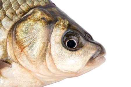 fish head: Crucian fish head with eye closeup shot
