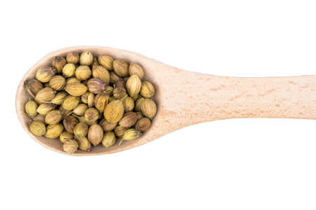 coriander seeds: Coriander seeds in a wooden spoon