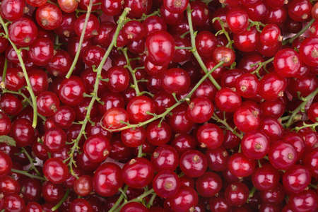 plurality: Background of the plurality of scattered sprigs of fresh redcurrant