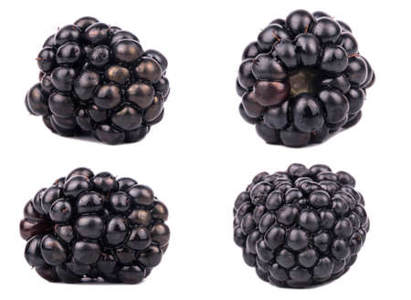 brambleberry: Collection of four blackberries isolated on a white background