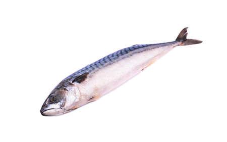 frozen fish: Frozen fish mackerel on a white background