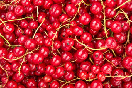 Background of fresh red currants closeup Stock Photo