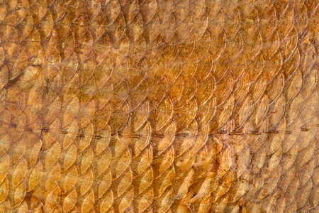 fish scales: Background of golden of smoked fish scales close-up