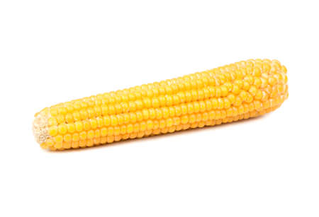Dry ear of corn for popcorn isolated on white background