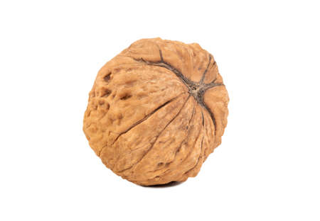 Dry large walnut isolated on white background Stock Photo