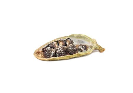 Half dry cardamom isolated on white background