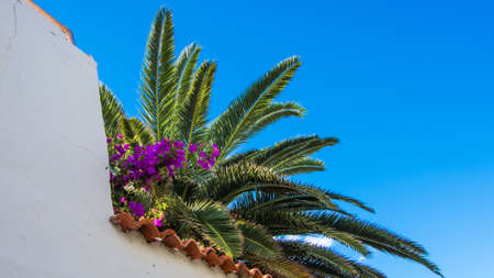 Palm trees and flowers in La Palma Stock Photo